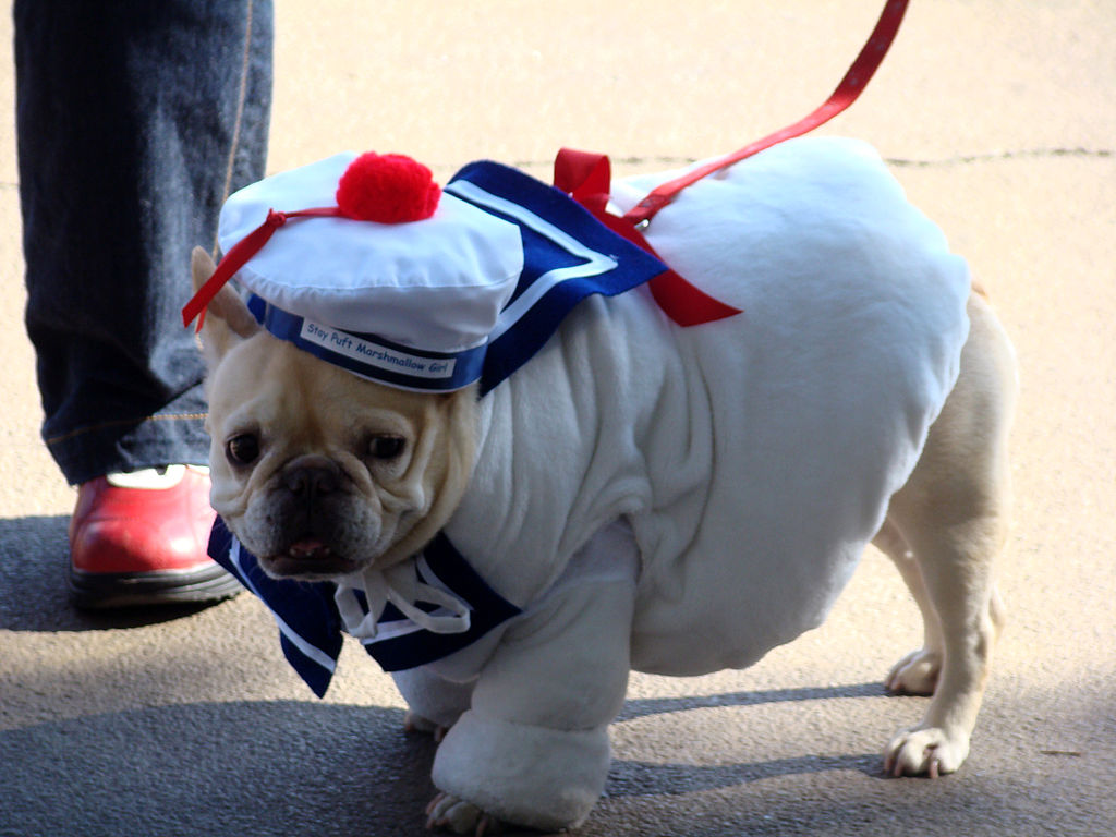 Dressing Up Your Dog can be fun, but sometimes, it's best to contact a designer