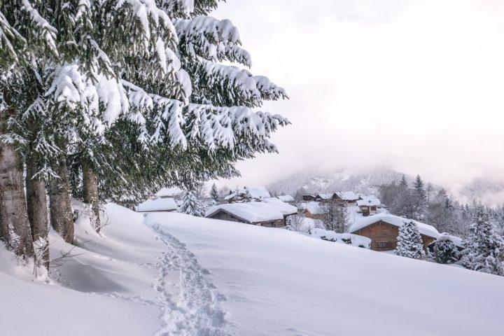 survive winter